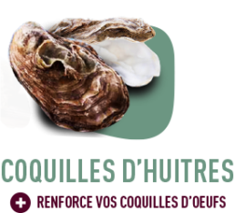 coquilles d'huîtres alimentation gasco