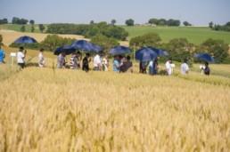 des agriculteurs dans un champ de blé