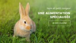 visuel d'un lapin dans un champ d'herbe pour la marque gasco
