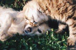 Alimentation et hygiène du chien et du chat