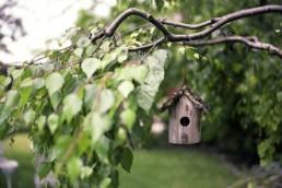 mangeoire suspendu à une branche d'arbre situé dans un jardin
