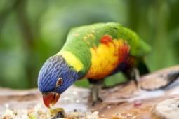 Le mode de vie des oiseaux de cage