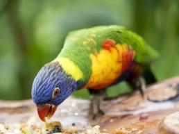 oiseau qui mange