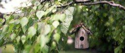 Nos conseils pour nourrir les oiseaux de votre jardin