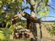mangeoire-graines_de_decouvertes-gasco